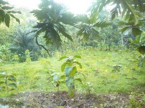 Kebun Mahad Salaf Cepu Usaha Bersama (53)